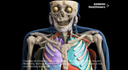 A video shows how AI software automatically contours the organs of a human.