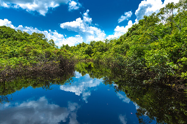 Amazonas Dschungel