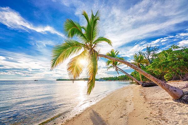 Dominikanische Republik, Füllbild, Strand, Palmen