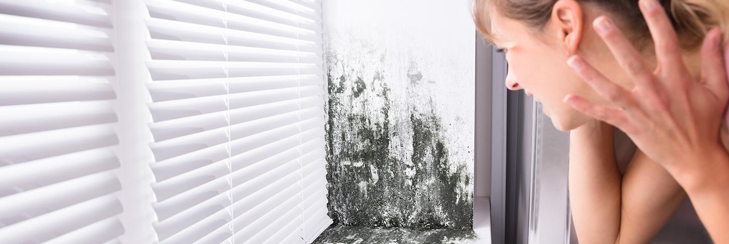 6 mold prevention tips for a healthy home