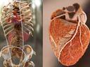 CT Cardiac Workshop