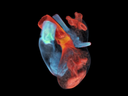 Digital Twin of the Heart