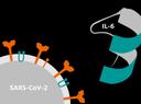 SARS CoV-2 and IL-6 illustration