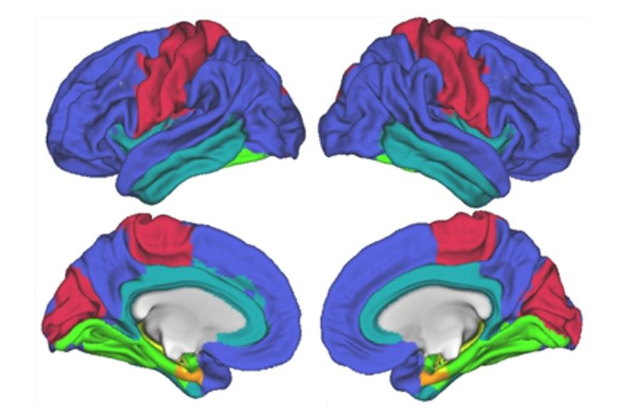 Brain Imaging Nature Article