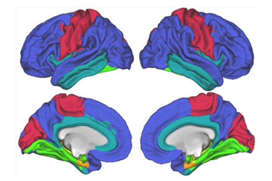 Brain Imaging Nature Article