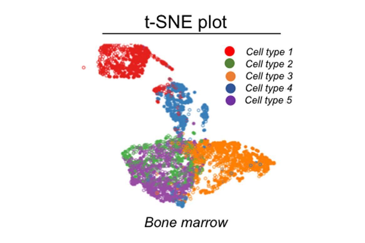 t-SNE plot