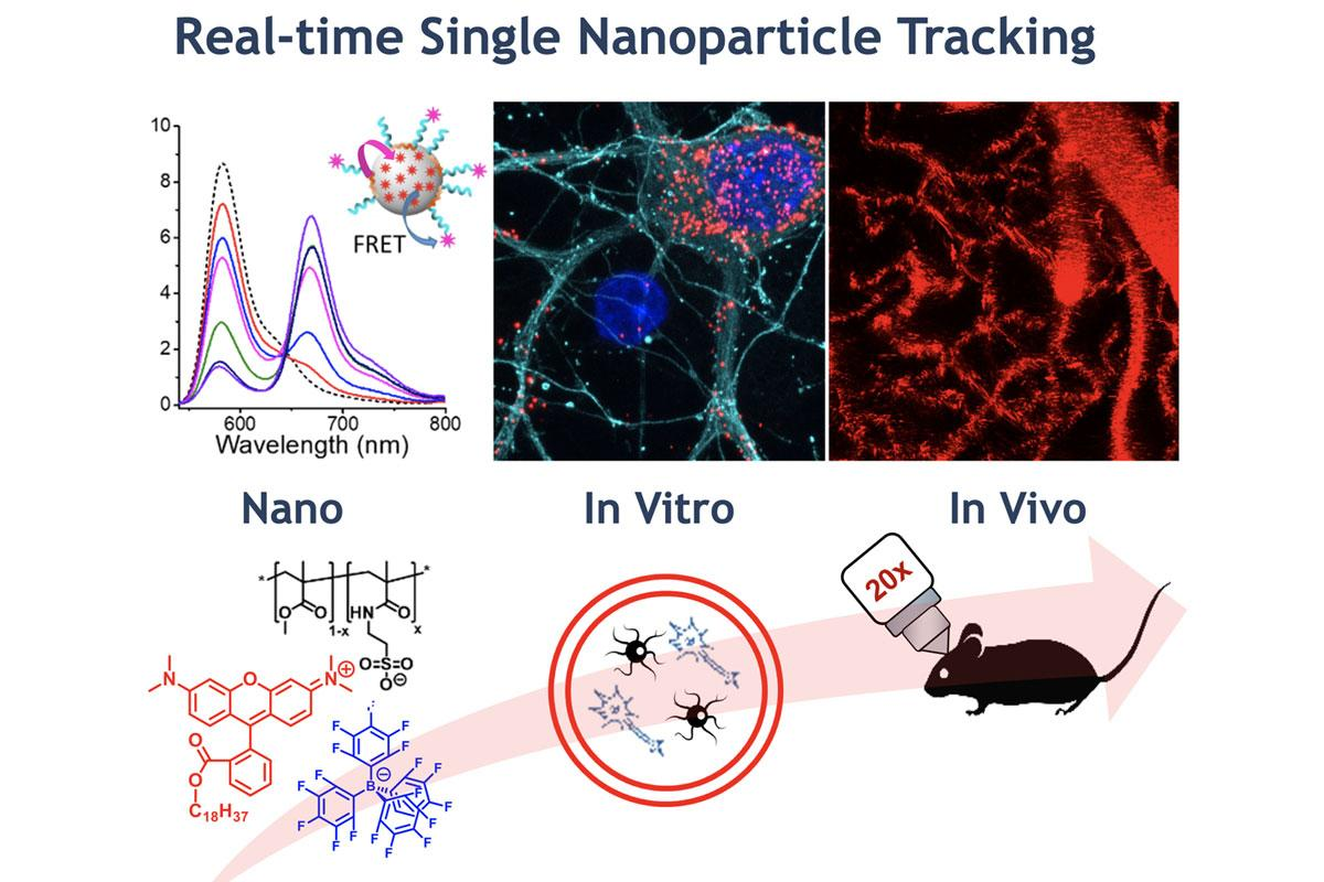 Real-time Single Nanoparticle Tracking