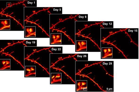 image science advances SL