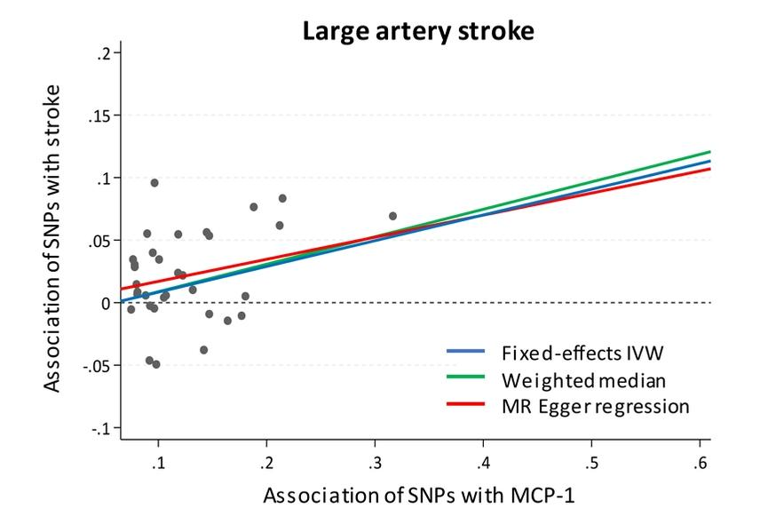 Role of Monocyte Chemo-attractant Protein-1 in stroke