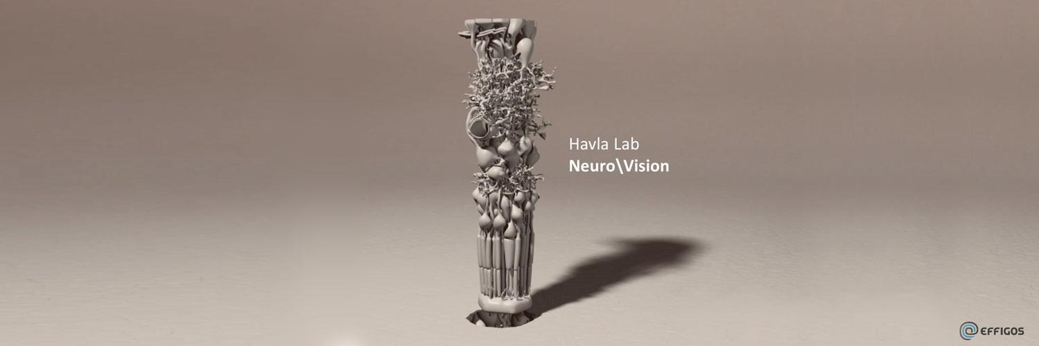 3D visualization of the structural organization of the retina (EFFIGOS; NeuroVisionLab)