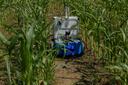 Ein autonomer Feldroboter fährt zwischen einer Mais-Mono-Kultur.