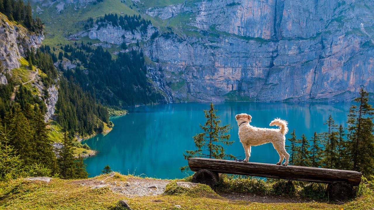 SAKRET Schweiz Coming-Soon | Hund blickt von einer Bank in die Ferne