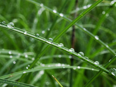 Waterdrops on grass leaves