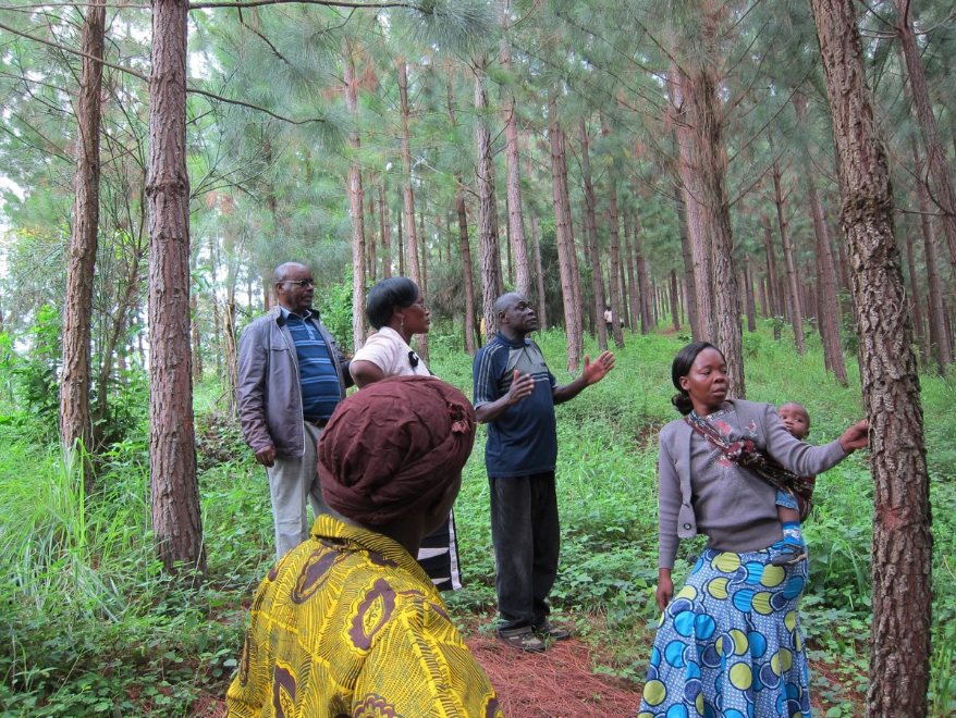 The picture shows people managing a tree nursery.
