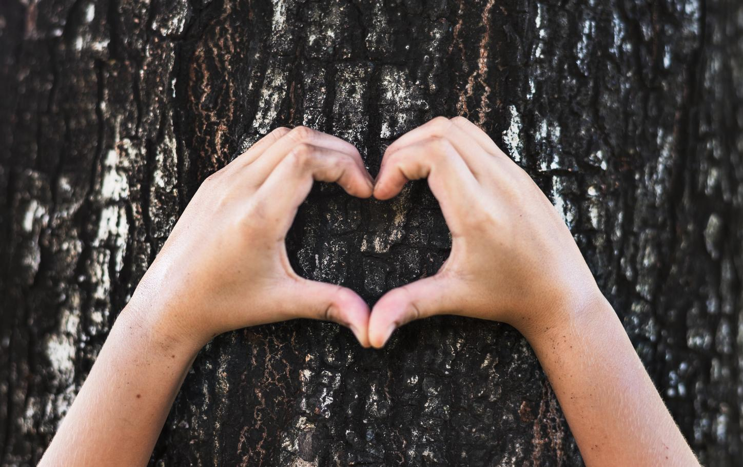 The image shows hands forming a heart in front of a tree.
