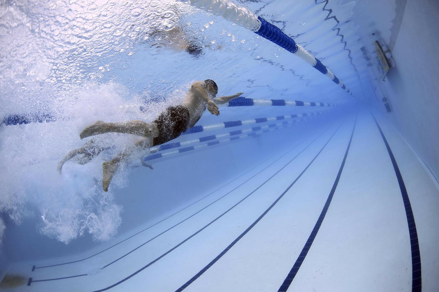 The picture shows swimmers in a swimming pool.