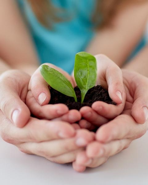 The image shows a green plant in the hands of a child and an adult.
