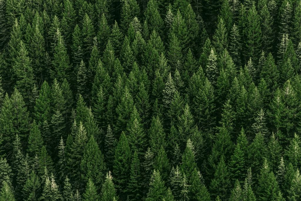 The picture shows a healthy coniferous forest from above