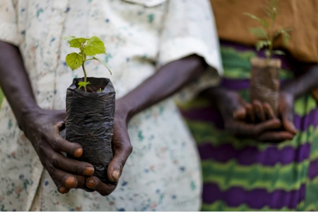 The image shows a young tree plant in the hands of local farmers.