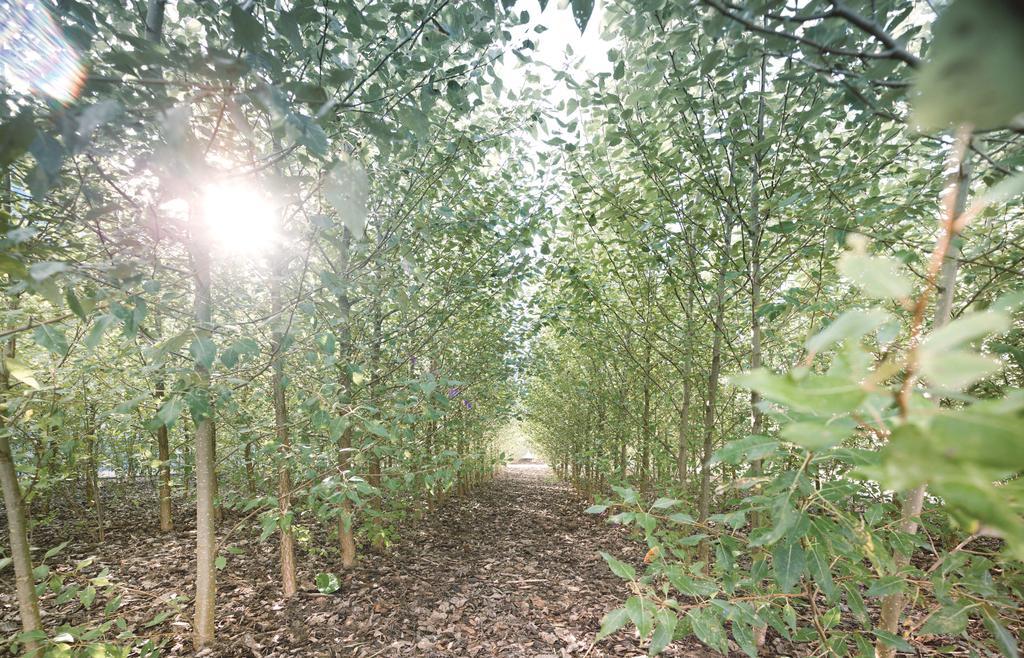 Das Bild zeigt den Pappelwald in Allendorf (Eder).