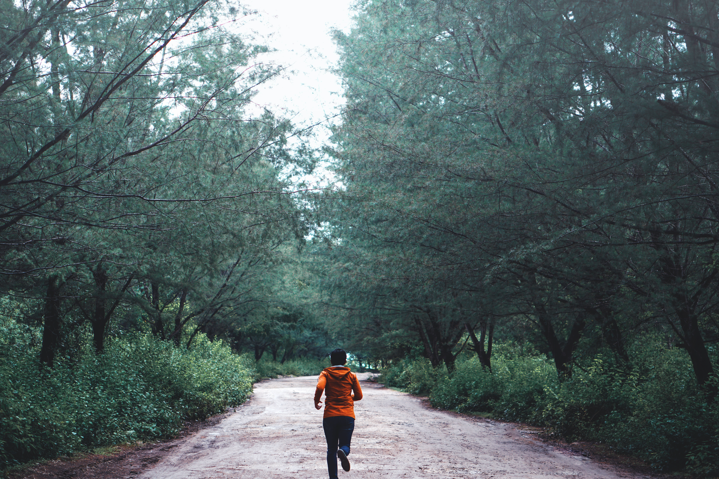 The picture shows a jogger in the forest