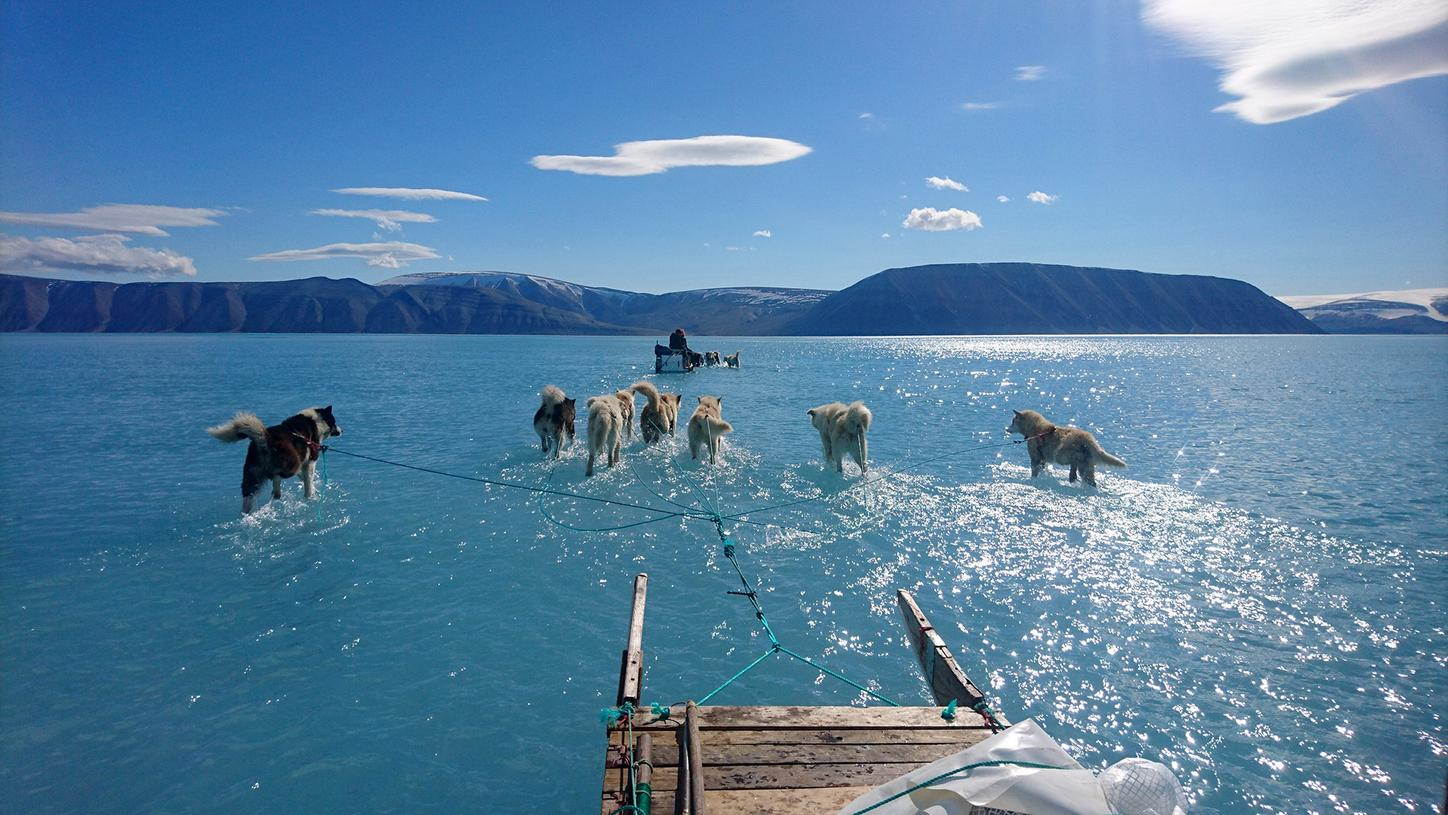 The image shows sledge dogs in meltwater.