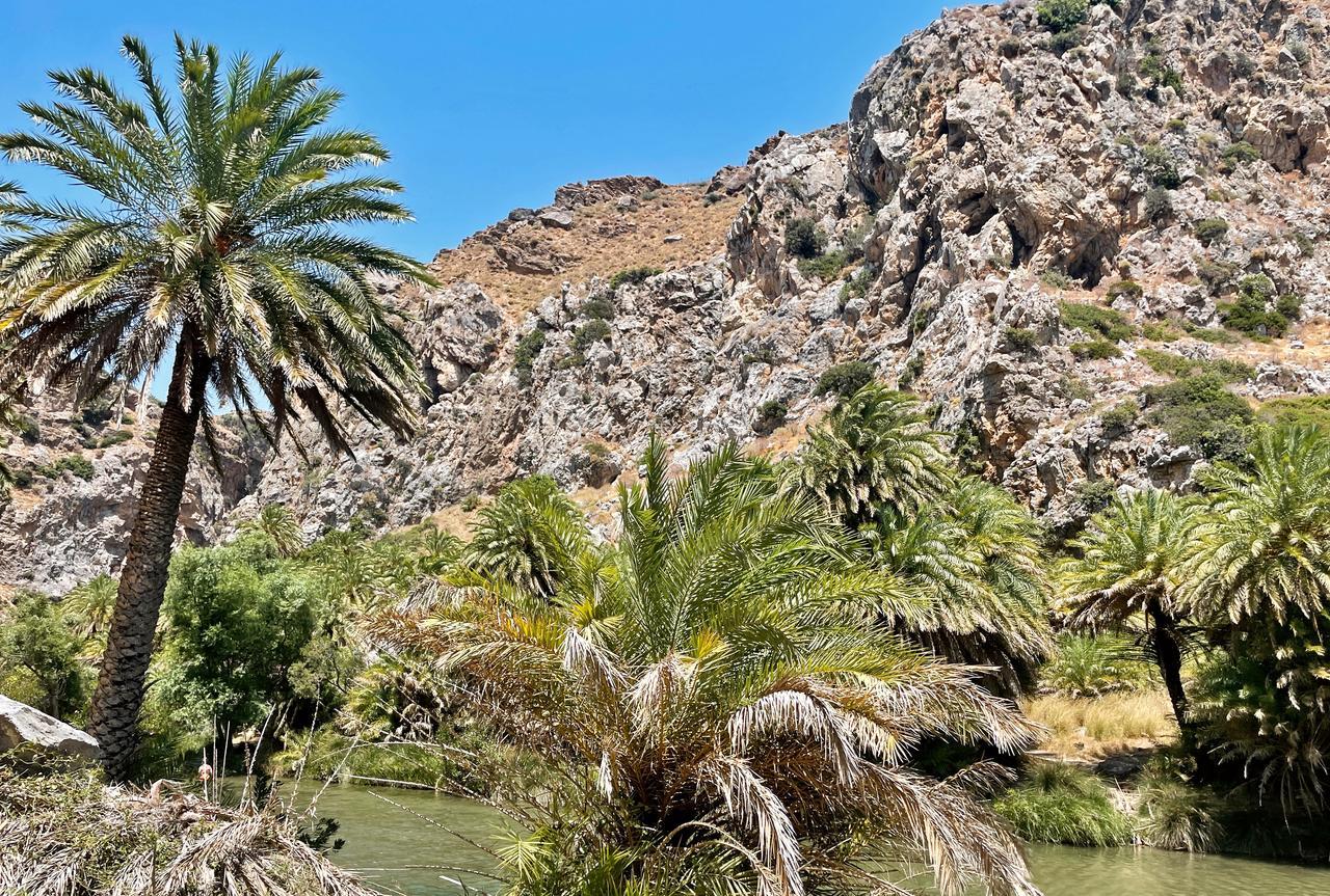 Am Fluss entlang befinden sich zahlreiche Palmen.