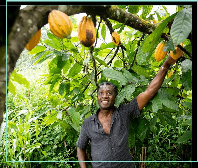 Kleinbauer aus Afrika unter Kakaobaum