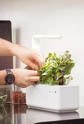 EMSA Kräutertopf auf Küchenoberfläche