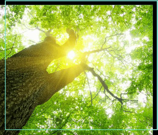 Baum in der Sonne