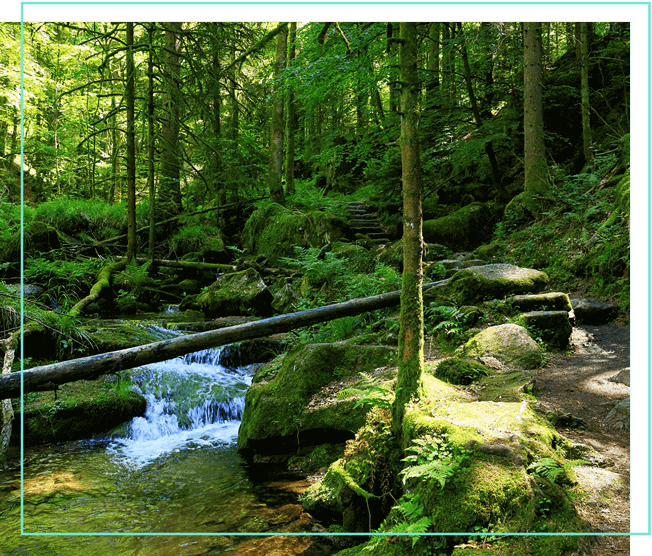 Schwarzwald Bach