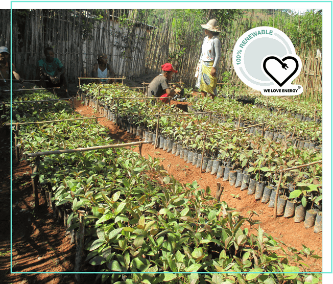 WE LOVE ENERGY Projekt Runforest