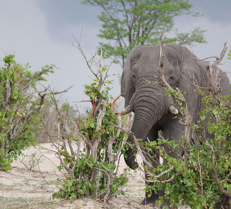 botswana elefant berge und meer