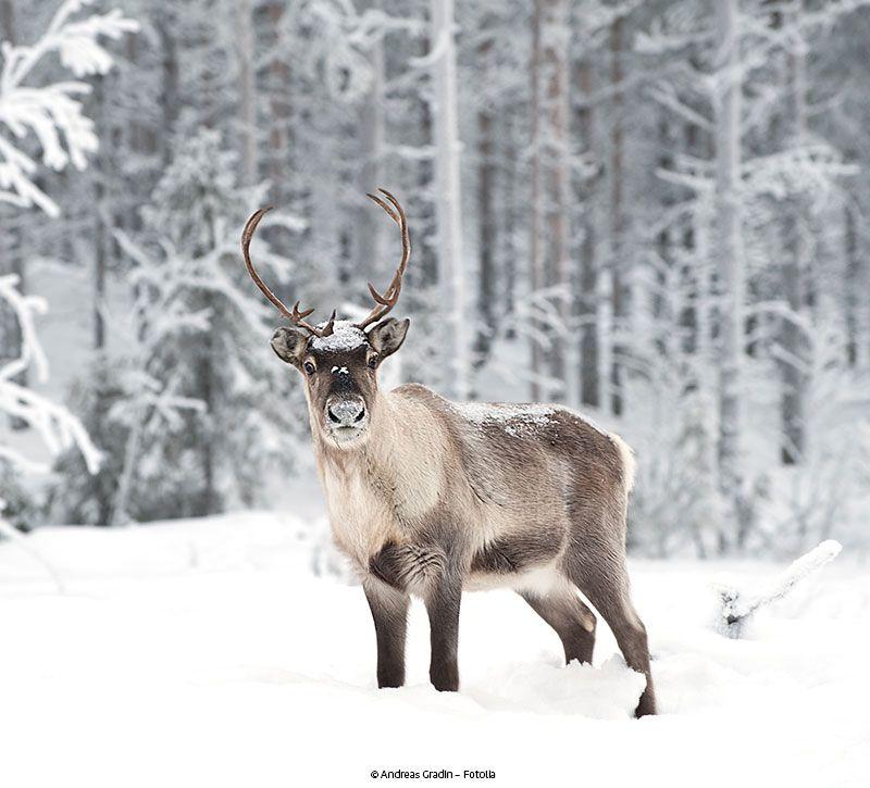 schweden elch berge und meer