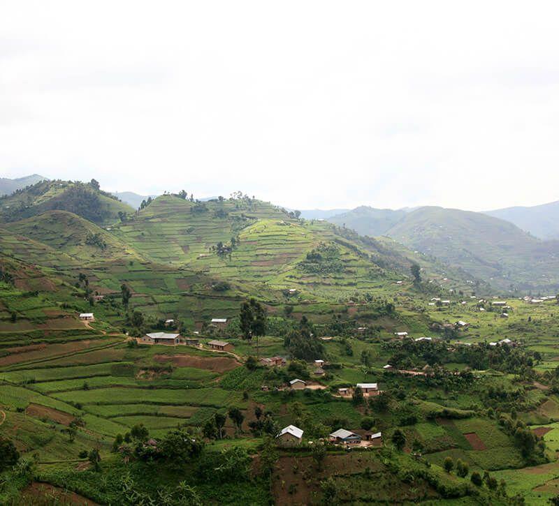 uganda tee berge und meer