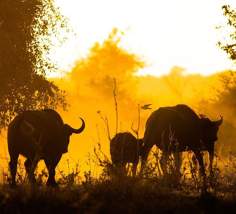 botswana chobe berge und meer