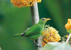 panama gruener vogel berge und meer