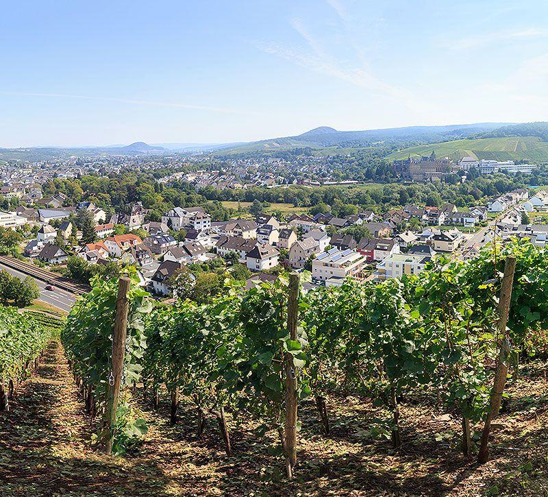 Teaser Weinberge Bad Neuenahr Steigenberger berge und meer