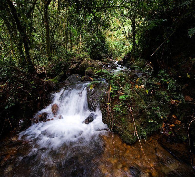 uganda bwindi berge und meer