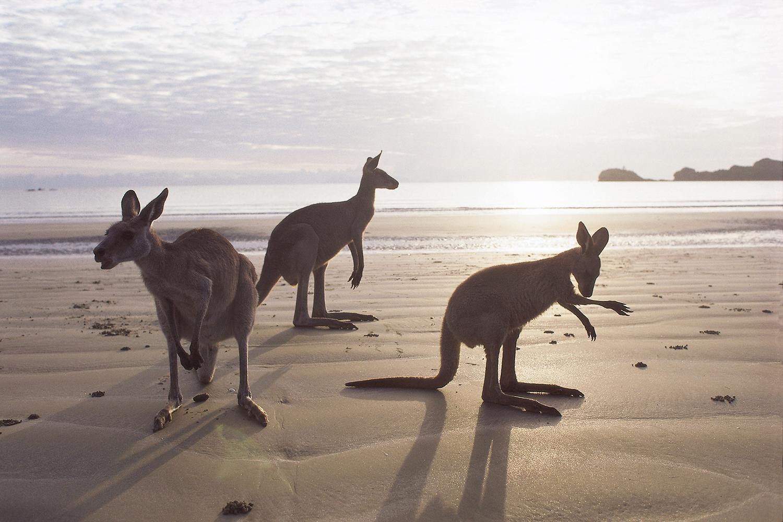 Australien, Cairns, kaengurus berge und meer