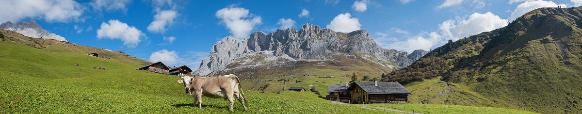 Schweiz Landschaft Kuh sonderbannerx berge und meer