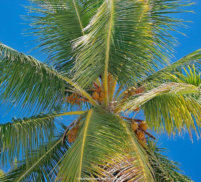 dominikanische republik palmera berge und meer