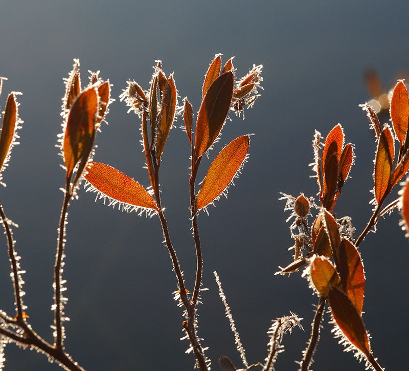 finnland frosted leaves berge und meer