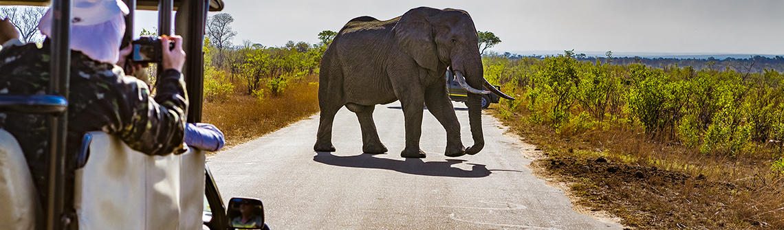 Suedafrika Elefant Safari berge und meer
