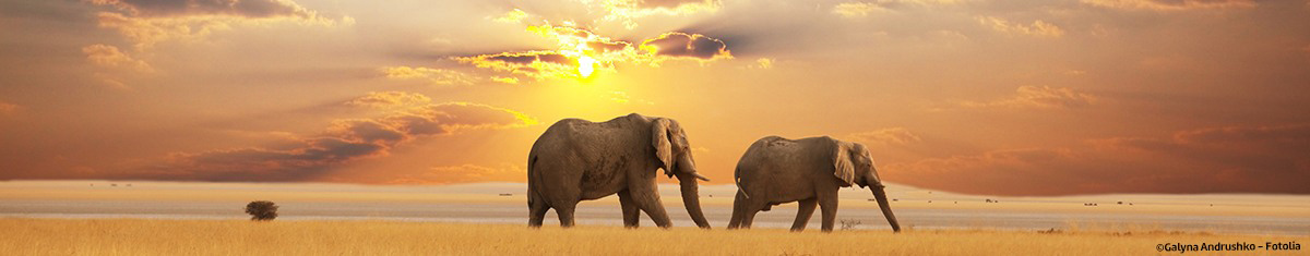 visa info afrika elefanten sonnenuntergang berge und meer