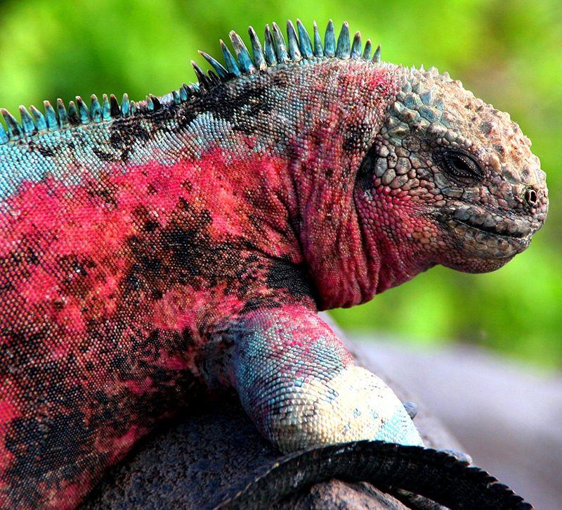 ecuador galapagos berge und meer