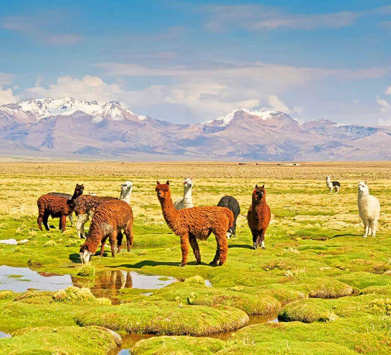 bolivien bolivien berge und meer