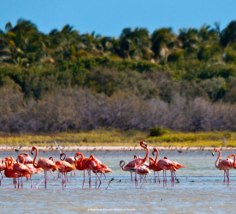 dominikanische republik flamingos berge und meer
