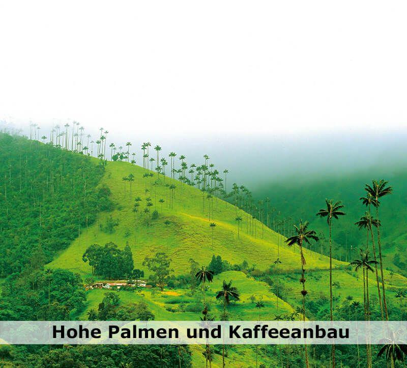 kolumbien kolumbien palmen berge und meer