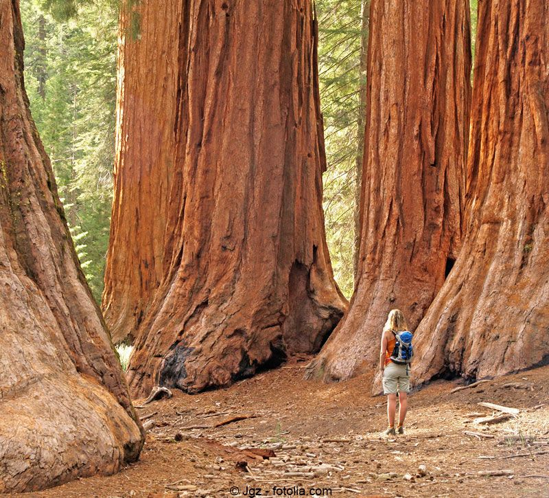 usa sequoia nationalpark berge und meer